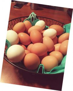 Egg gathering at The Ranch at Walston Springs 8%
