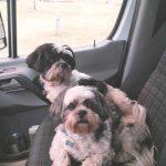 Max & Sophie in RV