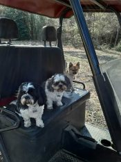 Max & Sophie on The Ranch at Walston Springs
